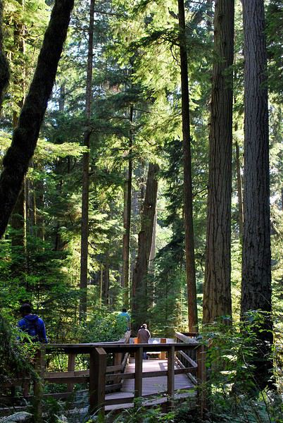 Cathedral Grove 1439585138-UZqzzFH4nDbNFcH