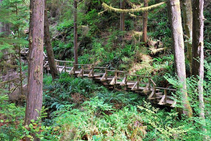 Pacific Rim National Park Reserve  / Schooner Trail 1439669227-agdMClPER3gE4Y3