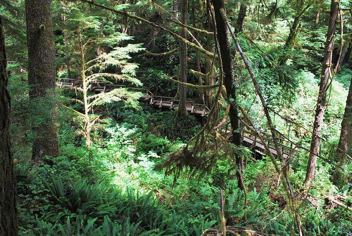 Pacific Rim National Park Reserve  / Schooner Trail 1439669379-gVMOX1cok91rS9E