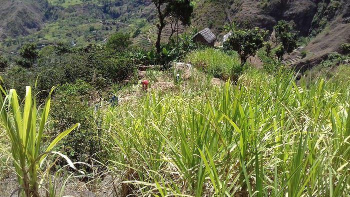 2 semaines de randonnées à Santo Antao (Cap Vert) - Mercuri63